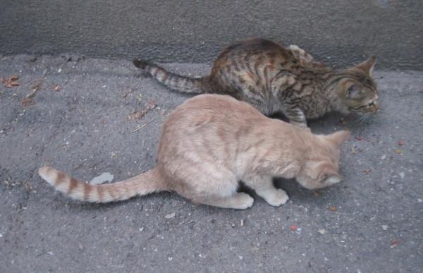 котики на старт
