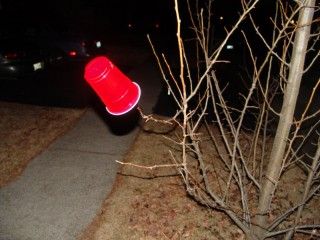 A red plastic cup in a tree