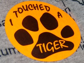 ORANGE STICKER - I TOUCHED A TIGER