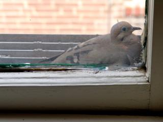 A Bird in the Window