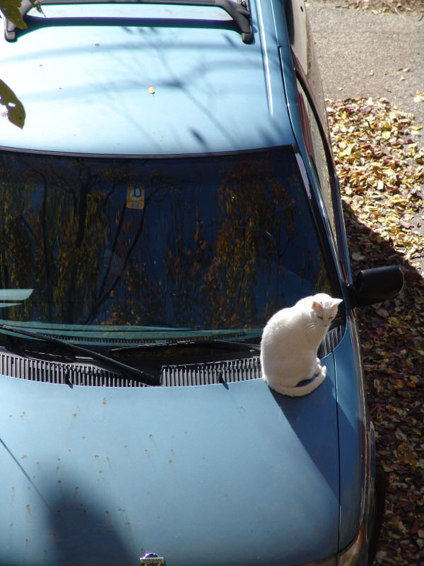Cat on a Van