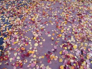Leaf-covered sidewalk