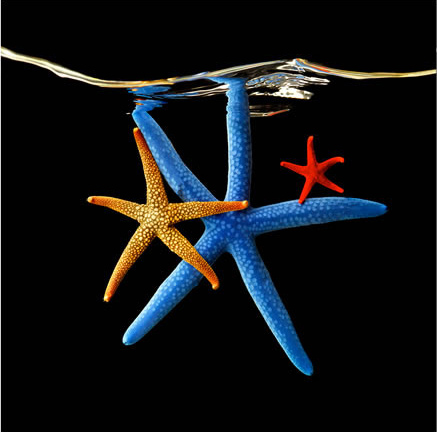 Марк Лайта (Mark Laita) Морские звезды