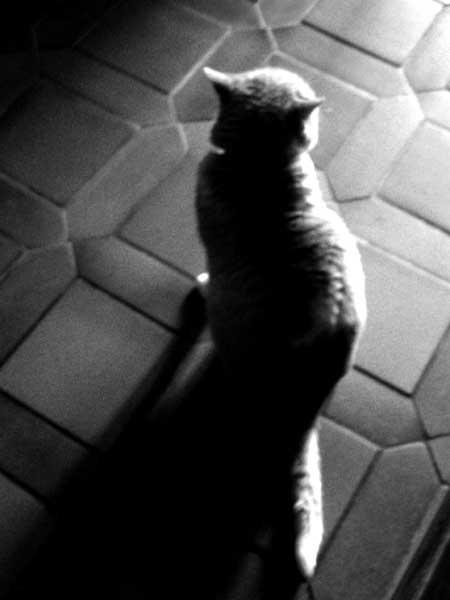 Cat agaisnt the light