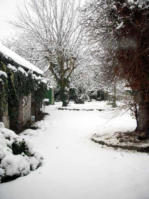 The back garden under snow
