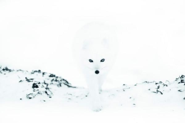 Белыйпесец
