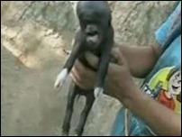 Поросёнок с человеческим лицом родился в Гватемале