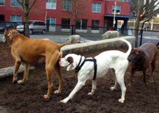 Картинки по запросу собаки лижут друг друга