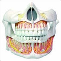 Неправильное питание – опасность для зубов