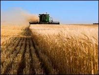 Пятую часть мировой потребности в энергии обеспечит биомасса