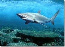 Воды у пляжей ЮАР наводнили большие акулы