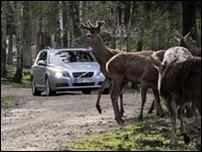 Автомобили Вольво будут сами тормозить перед оленями и лосями