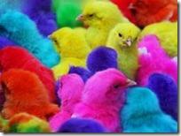 Новое развлечение - разноцветные цыплята