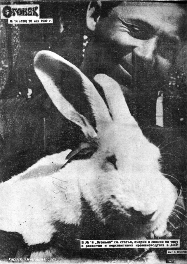 Кролик журнал Огонек 1932 №14