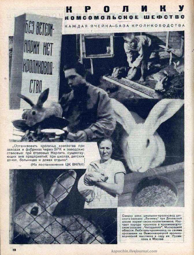 Кролику комсомольское шефство 1932 №10 стр 18