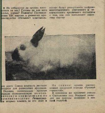 Кролики Смена №13 июль