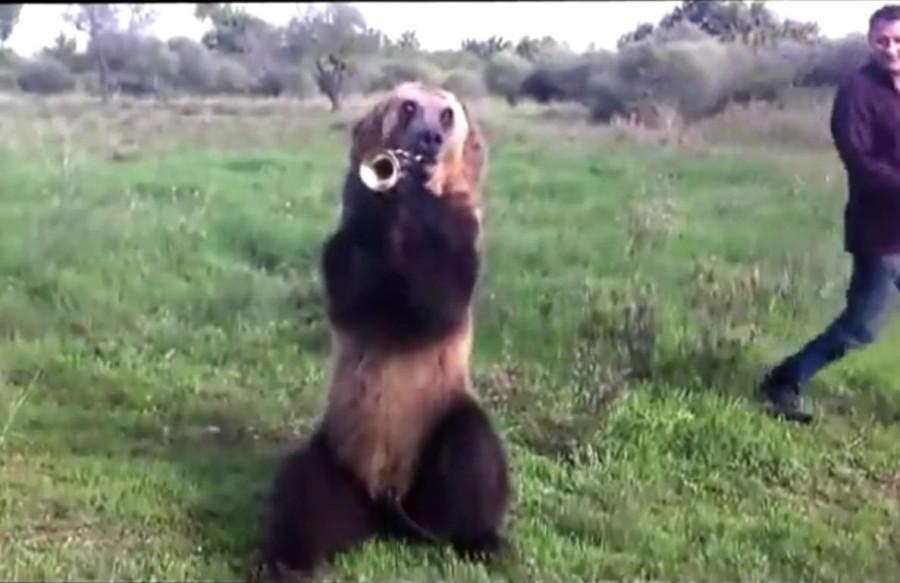 Дрессированный медведь 1