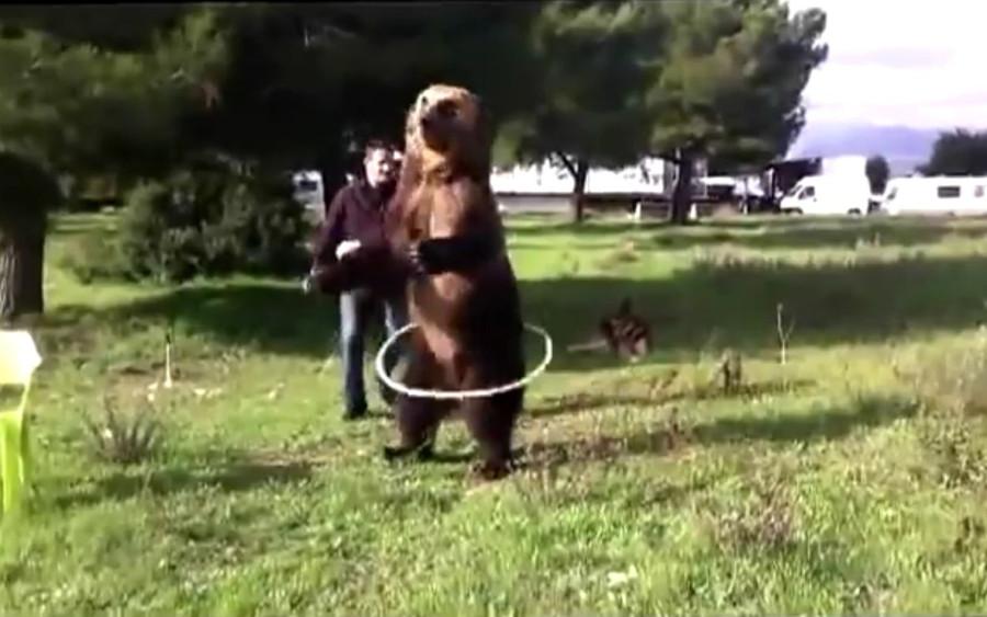 Дрессированный медведь 2