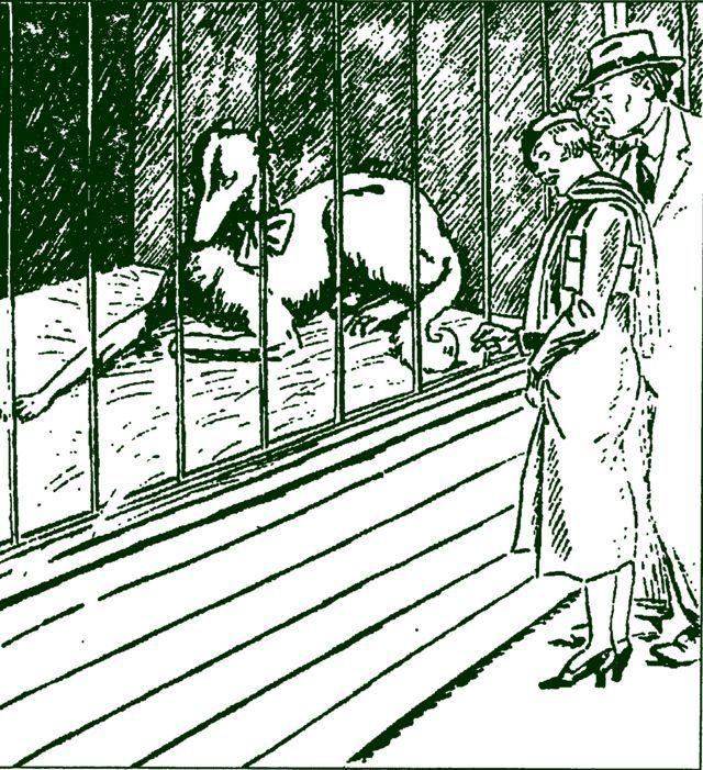На собачьей выставке 1931 год