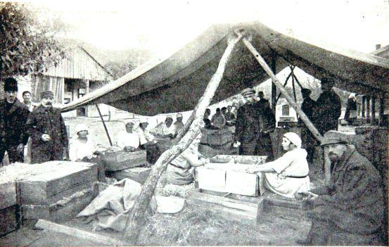 Сортировка и упаковка фруктов в Крыму 1920-е