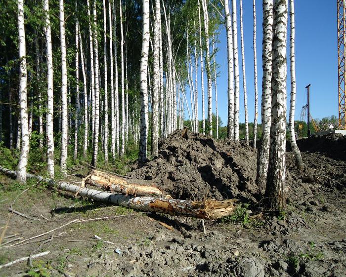 Сколько еще деревьев погибнет от этих