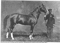 Старая донская лошадь