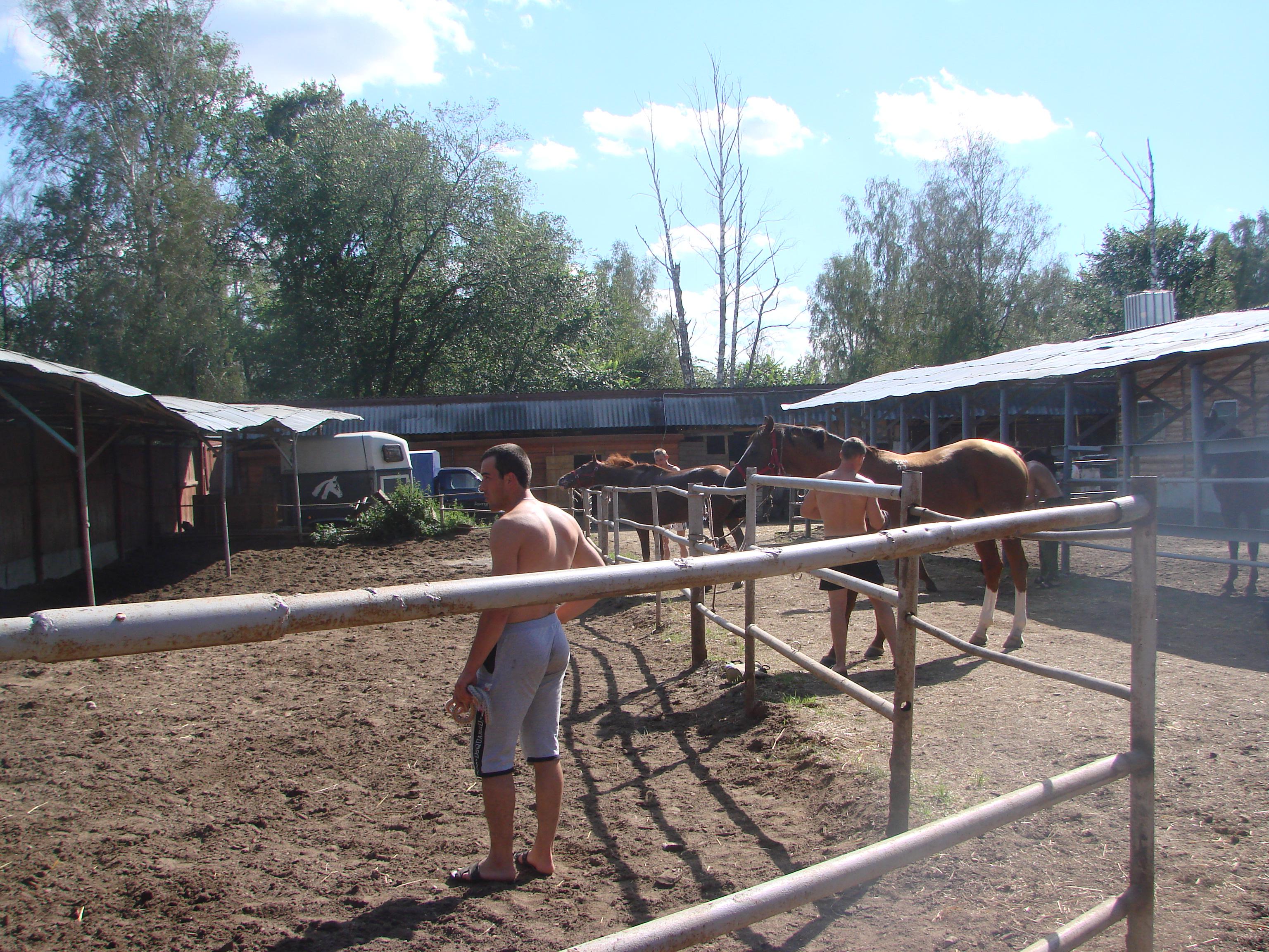 Собирают коней на работу