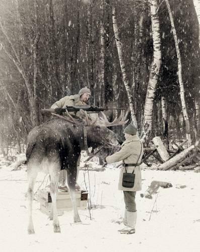 Лось и кавалерия