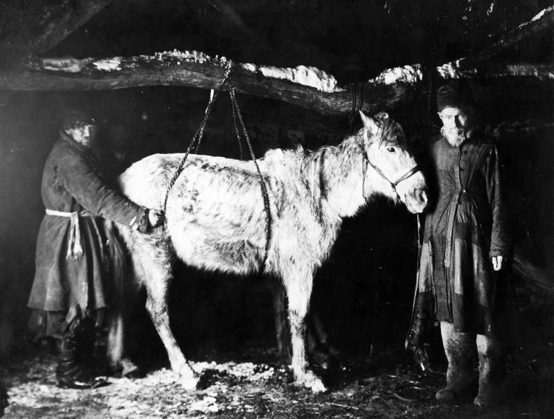 Крестьянская лошадь в России