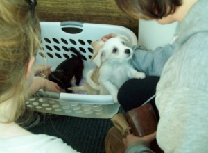 Puppies in a basket in front of Walgreens
