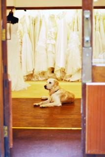 Bridal shoppe dog