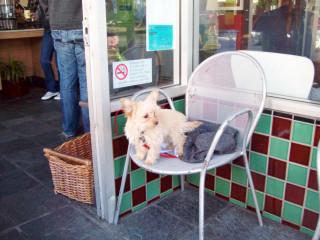 Dog outside Dolores Park Cafe