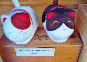 Solar powered cats