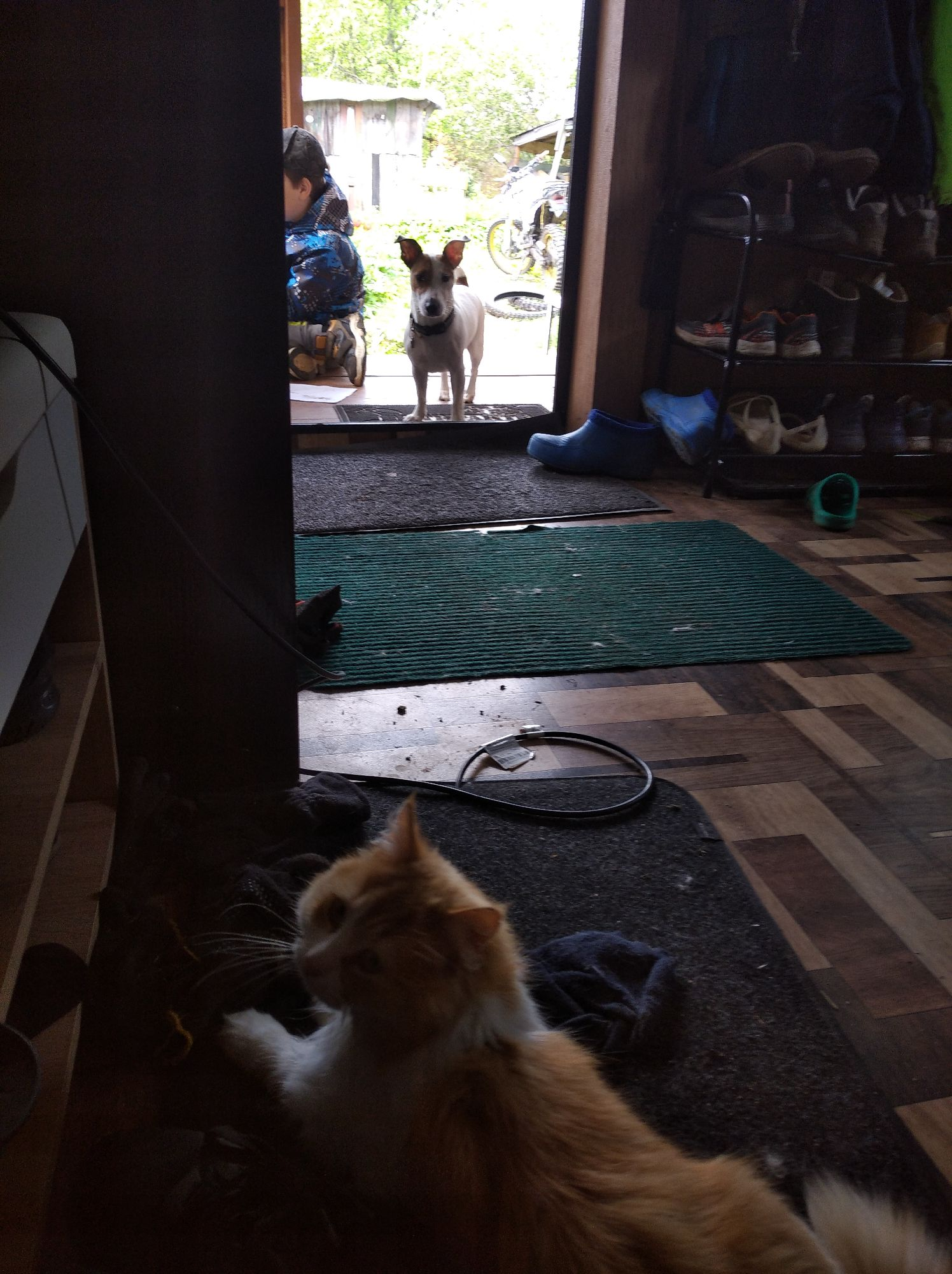 Кошка не пускает в дом чужую собаку, а собаченька скулит стоит от нетерпения