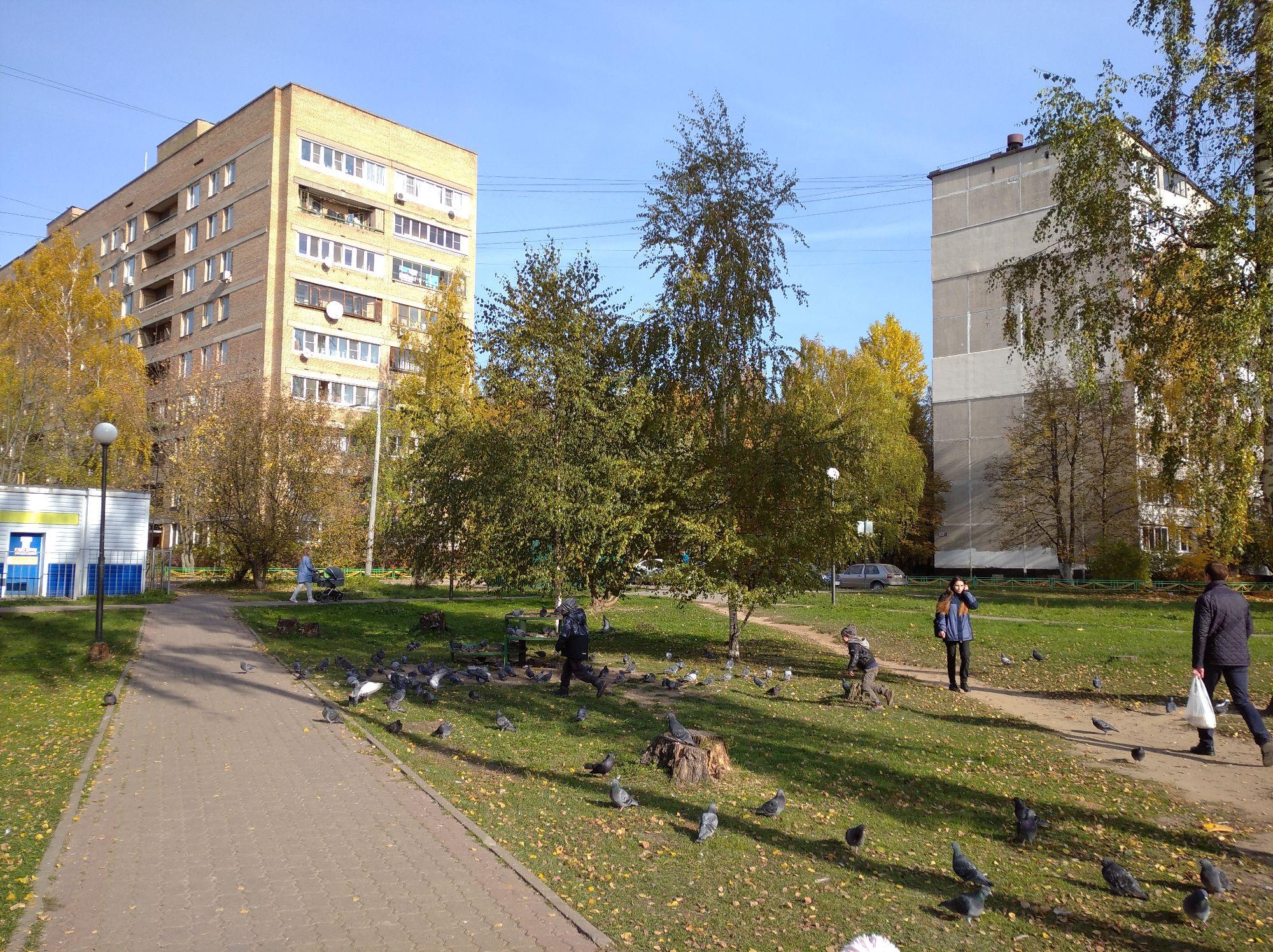 Легендарное место Березовая роща, тут жила тетя, все время здесь были эти голуби ,там Кирилл и сын подруги детства бегают
