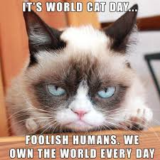 world cat day grumpy