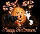 HalloweenCats