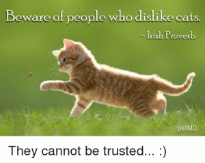 beware-of-people-who-dislike-cats-irish-proverb-petmd-they-4891914