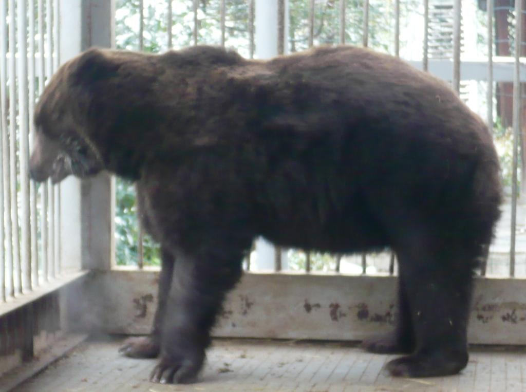 медведь 11