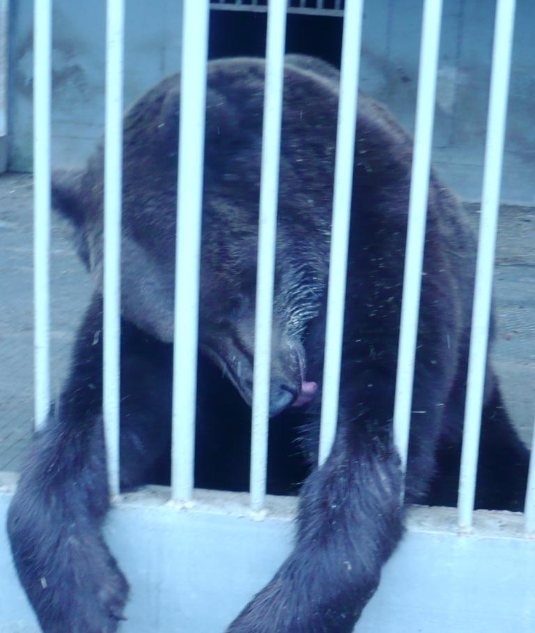медведь4