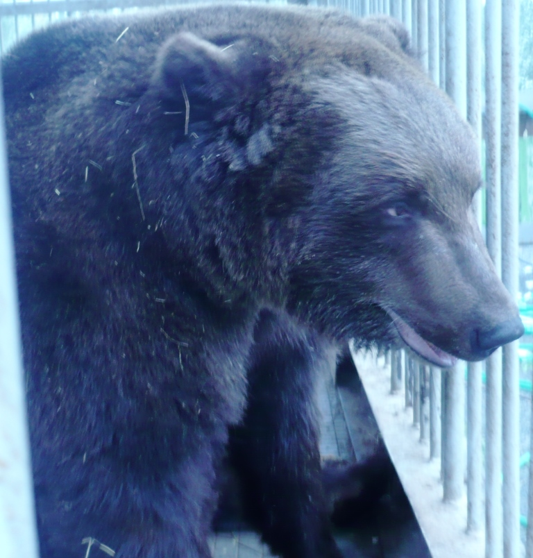 медведь5