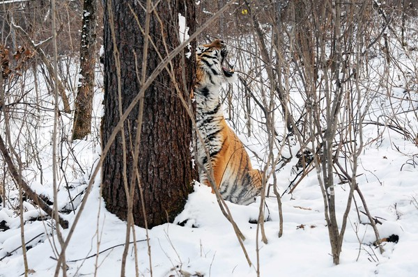http://ic.pics.livejournal.com/karen_dallakyan/30203430/76339/76339_original.jpg