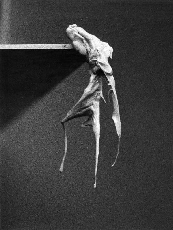 10_Alina_Szapocznikow,_Photosculptures_(detail),_1971,_2007___AL-29