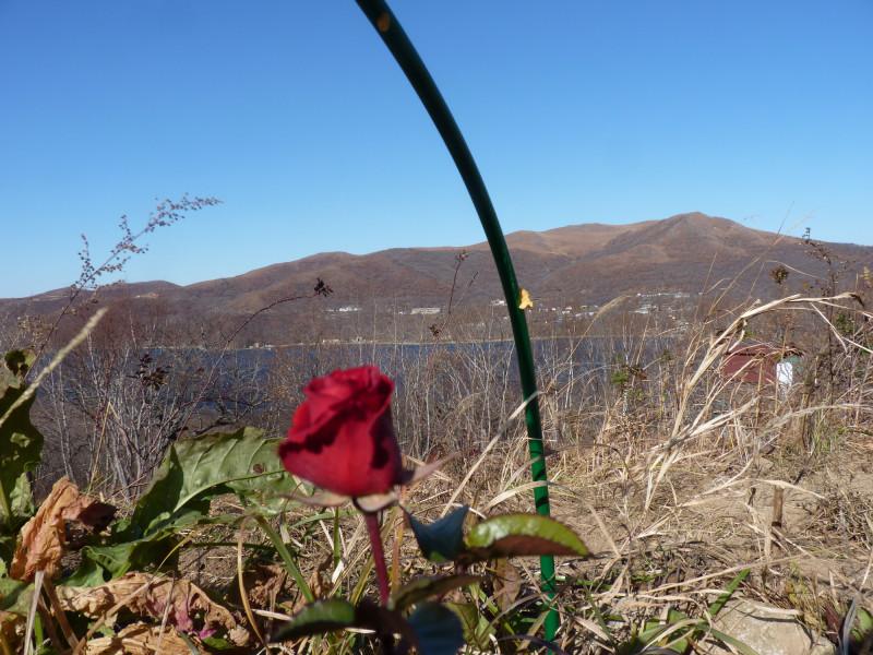 Розы на Витязе. 1 Ноября.