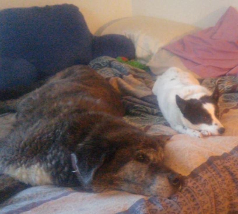 05. Jack-the-Bear - Papa's Pups.jpg