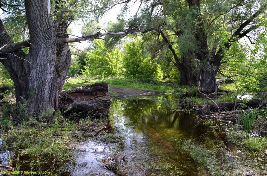 ивы и ручей