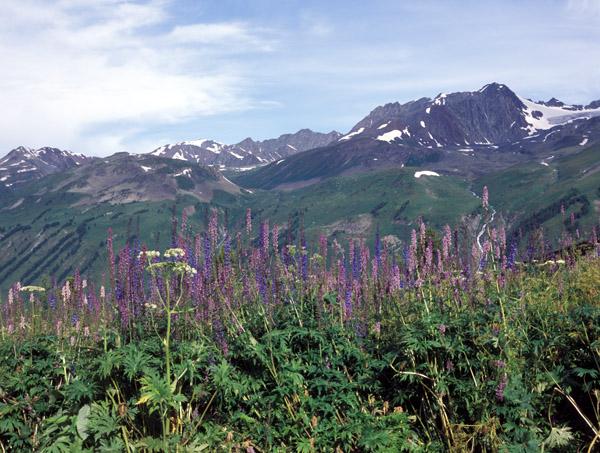 Алтай, Катунский хребет