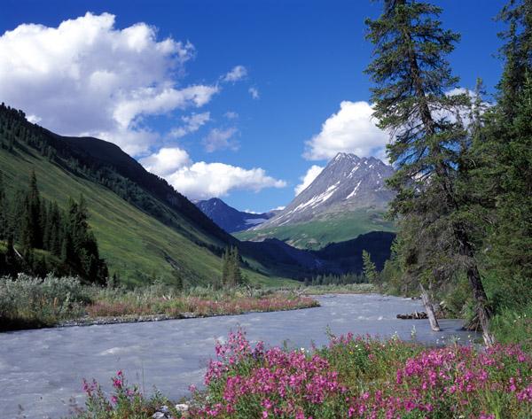 Алтай, река Белая Берель