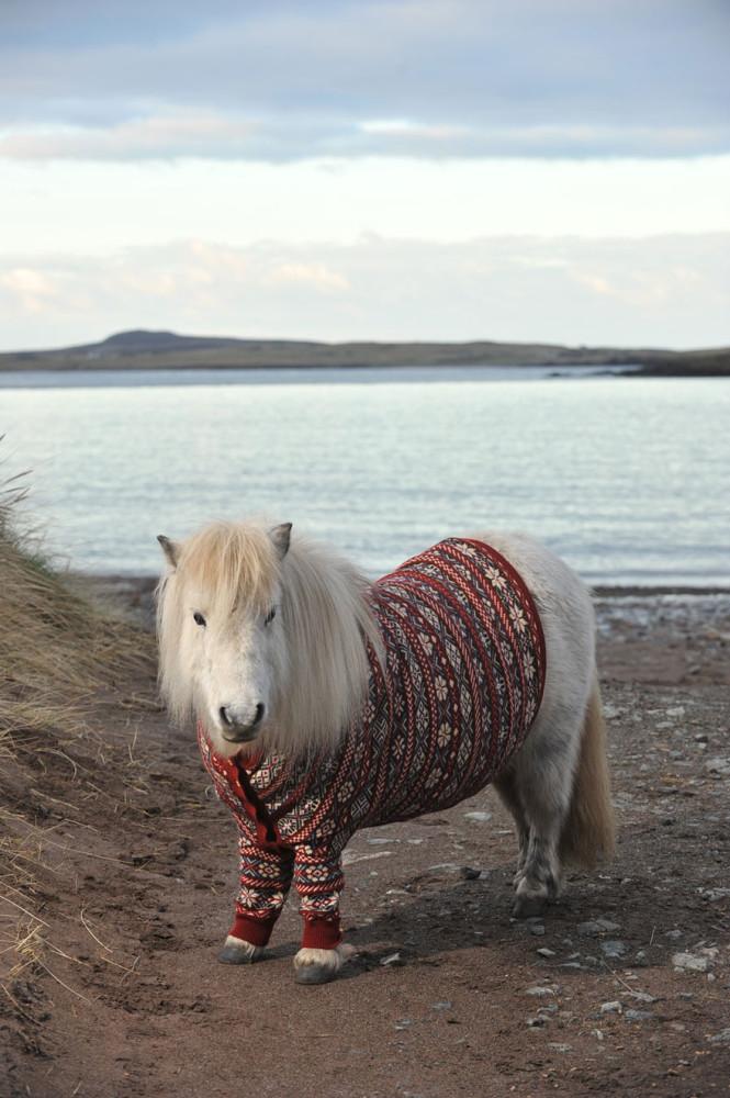 Shetlandskie_poni_odeli_svitera7