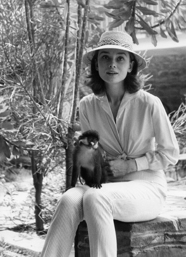 15_0649_hepburn_the_nuns_story_monkey_on_lap_1_portrait